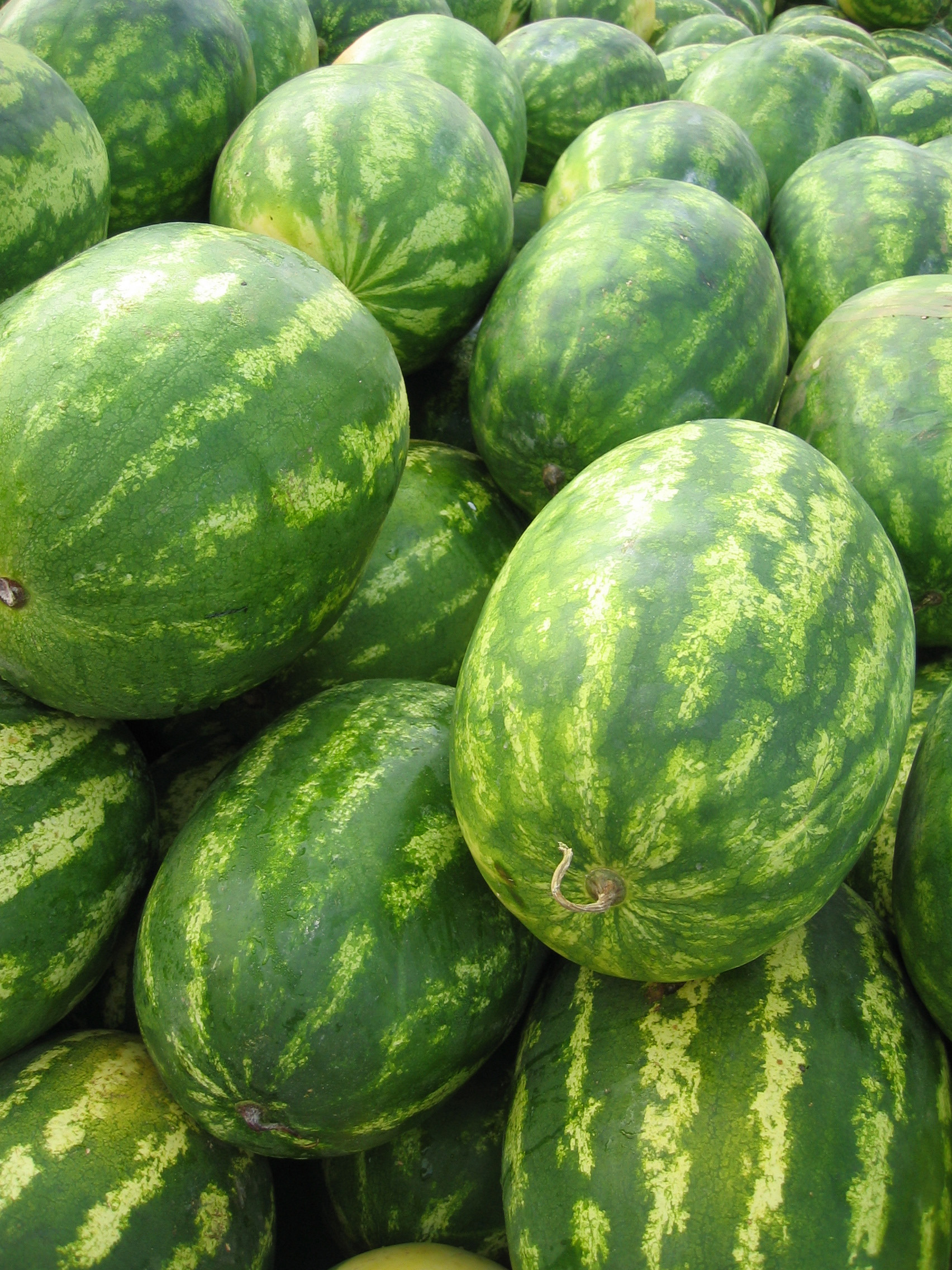how to grow huge watermelons